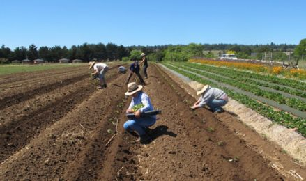 UCSC Farm and Alan Chadwick Garden