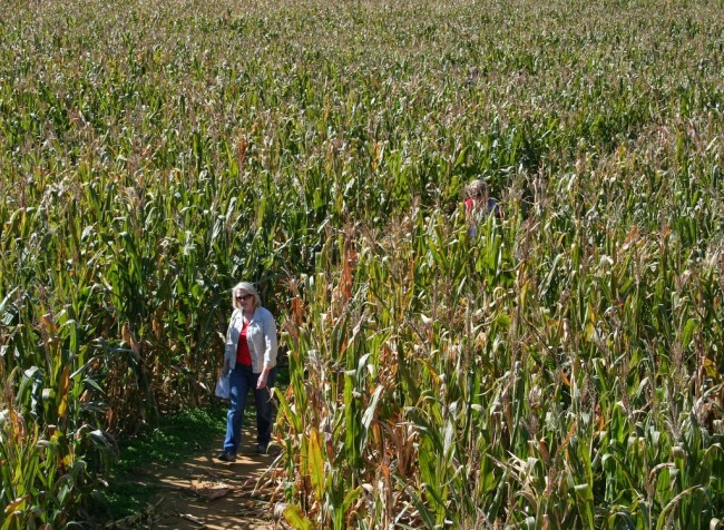 J & L's Corn Maize Craze