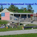 Homestead Animal Farm