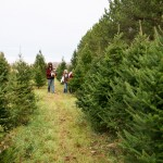 Plants Beautiful Nursery Christmas Tree Farm