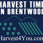 Harvest Time in Brentwood Growers Association