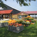 Harvest Festival at Evans Orchard and Cider Mill