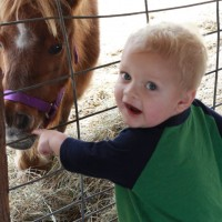 Horse power for kids ,petting farm,riding stables
