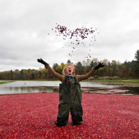 Johnston's Cranberry Marsh & Muskoka Lakes Winery
