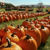 23rd Annual Sinkland Farms Pumpkin Festival