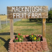 Mackintosh Farm
