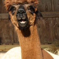 TAG ALONG ALPACAS, LLC