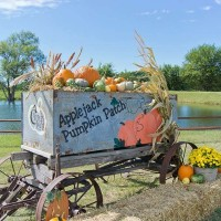 Applejack Pumpkin Patch & Event Barn