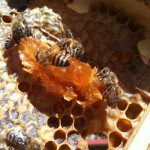 Tassot Apiaries @ Buzzing Acres Farm