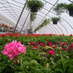 Sunset Greenhouses and Flowerland