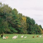 Longwoods Alpaca Farm, LLC